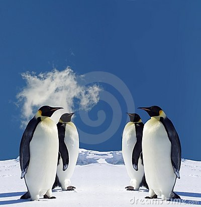 Free Penguins Royalty Free Stock Photography - 1439547