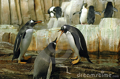 Penguins in conference