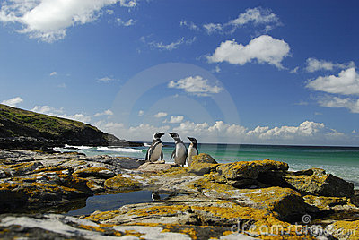 Penguins in Falkland islands
