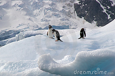 Penguins on iceberg in Antarctica
