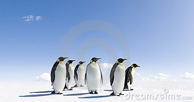 Penguins on icy landscape
