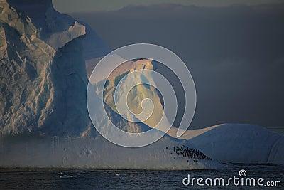 Penguins sleeping on iceberg of Antarctica