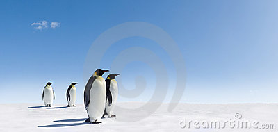 Penguins on snowy landscape