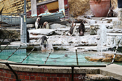 Penguins Zoo