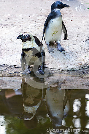 Penguins in the zoo