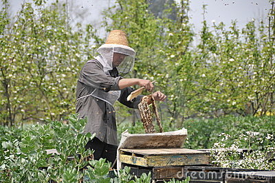 Pengzhou, China: Beekeeper with Honeycomb Editorial Photo