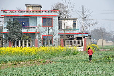 Pengzhou, China: Blue Tiled Farmhouse and Crops Editorial Stock Image