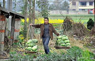 Pengzhou, China: Farmer Carrying Cabbages Editorial Stock Image