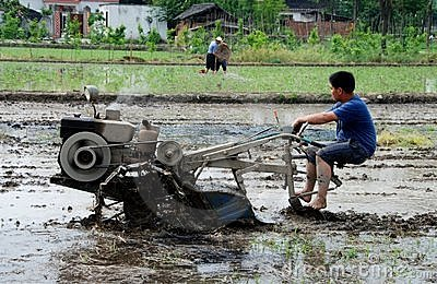 Pengzhou, China: Farmer Plowing Rice Paddy Editorial Photo