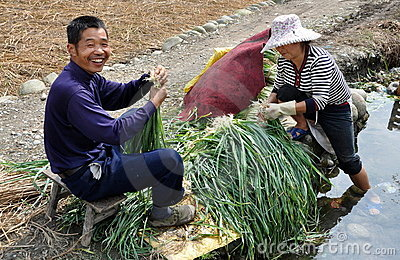 Pengzhou, China: Farmers Washing Scallions Editorial Stock Image