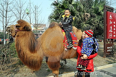 Pengzhou, China: Little Boy on Camel Editorial Photography