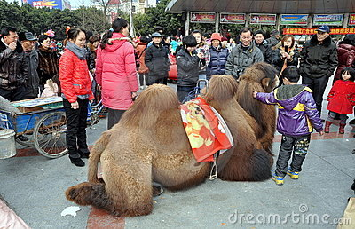 Pengzhou, China: Little Boy with Camel Editorial Stock Photo