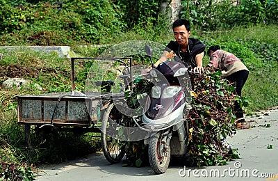 Pengzhou, China: Man on Motorbike with Vines