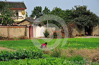 Pengzhou, China: Woman Working in Field Editorial Photo