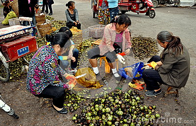 Pengzhou, China: Women Shelling Fresh Walnuts Editorial Image