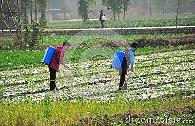 Pengzhou, China: Women Spraying Field Editorial Stock Photo