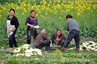 Pengzhou, China: Women Washing Radishes Editorial Image