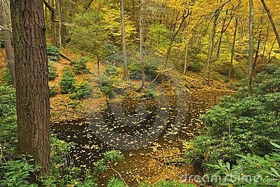 Pennsylvania Forest In Autumn