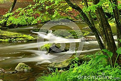 Pennsylvania Forest Stream
