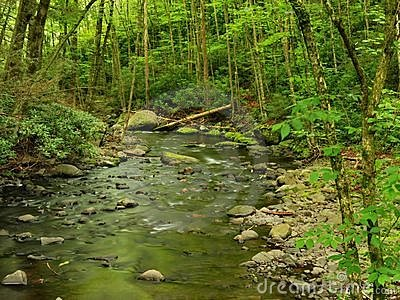 Pennsylvania Forest Stream In Spring