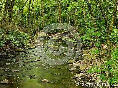 Pennsylvania Forest Stream In Spring Stock Photos Image