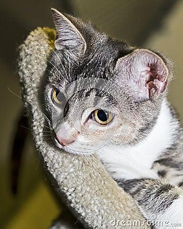 Pensive kitten