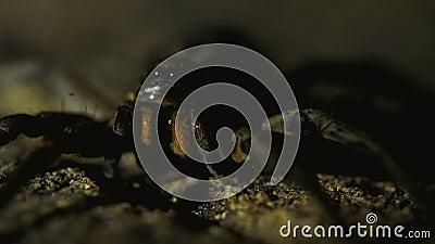 Pentola alta vicina sparata dell'aracnide nella recinzione video d archivio