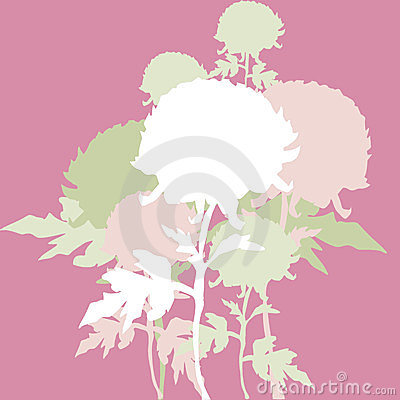 Peon flowers background