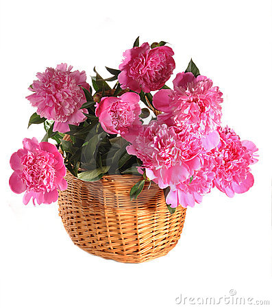 Peonies in a basket the isolated
