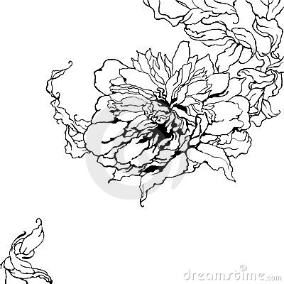 Peony, black and white