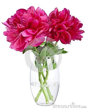 Free Peony In Vase Isolated Stock Image - 19977981