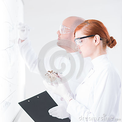 People analyzing in a lab