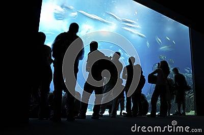 People looking at big aquarium