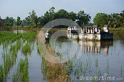 People relax by fish river fish on rice field  in flooding seaso Editorial Stock Photo
