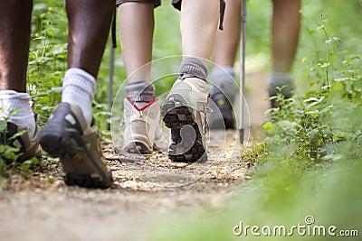 People trekking in wood and walking in row