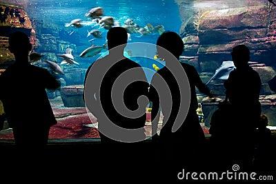 People viewing aquarium