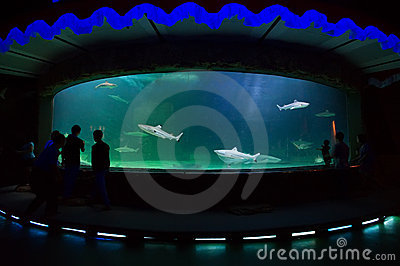 People watching shark inside big aquarium