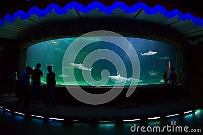 People watching shark inside big aquarium