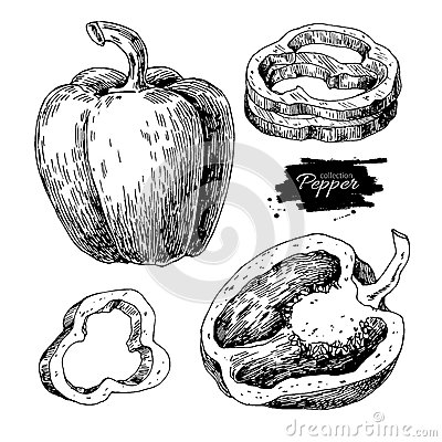 Pepper hand drawn vector set. Vegetable engraved style object, f Vector Illustration