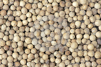 Pepper Seeds Stock Image - Image: 25009061