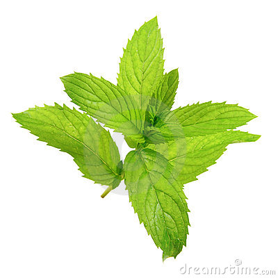 Free Peppermint Royalty Free Stock Image - 20714306