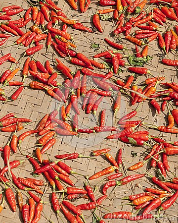 Peppers Drying in Sun