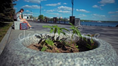 Pequeña planta del cáñamo en cama de flor en parque de la ciudad almacen de video