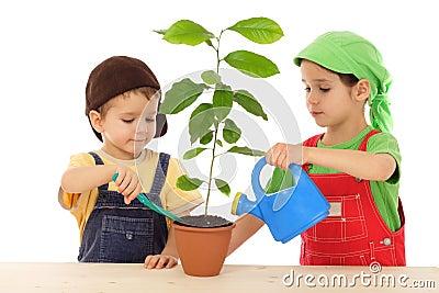 Como cuidar las plantas for Como cuidar las plantas