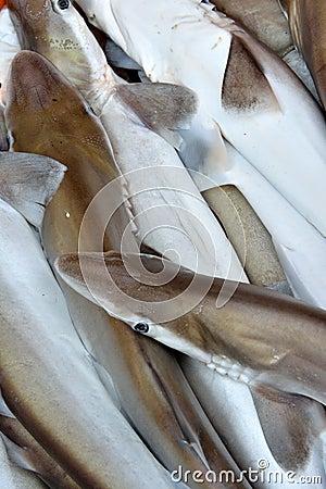 Pequeños tiburones