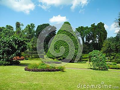 Peradeniya Botanical Garden landscape