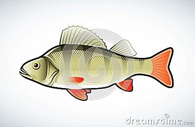 Perch illustration
