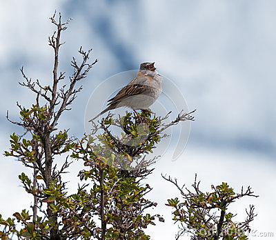 Perched Bird.