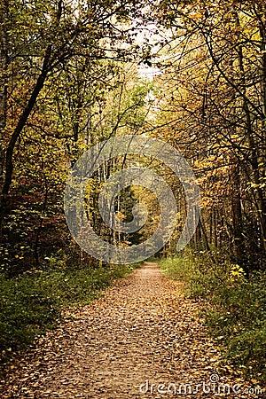 Percorso di foresta in autunno