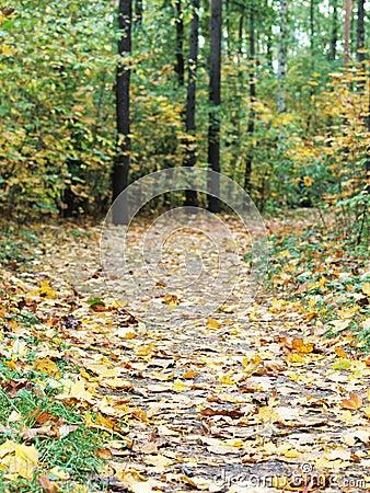 Percorso di foresta di autunno